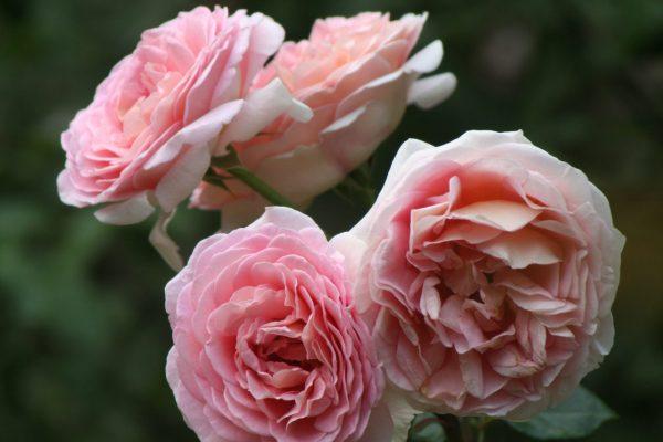 garden 2006 032