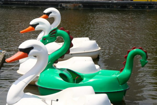 The young and the young forever, will love the swan and dragon boats.