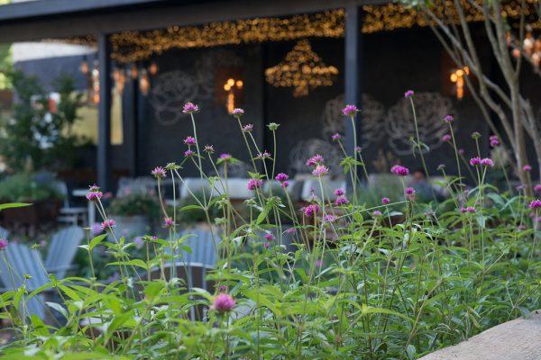PHS South Street Pop Up Garden 2016